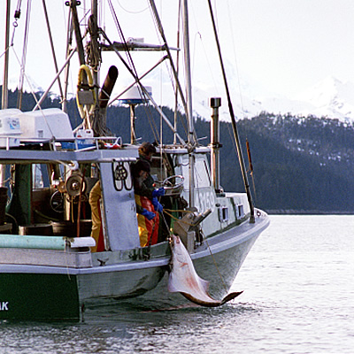 Pacific Gold Seafood. Inc - Why Pacific Seafood..... Wild ... - photo#40